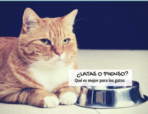 Pienso o latas para gatos, comida húmeda o seca, qué es mejor