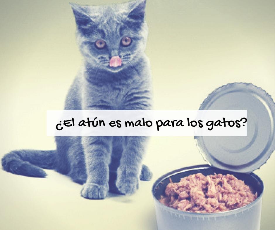 Atún malo o bueno para gatos   Foto: http://pets.webmd.com