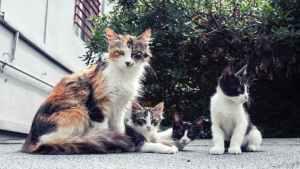 Siempre que sea posible no se debe separar al gatito de su madre | Foto: pexels.com umit ozbek