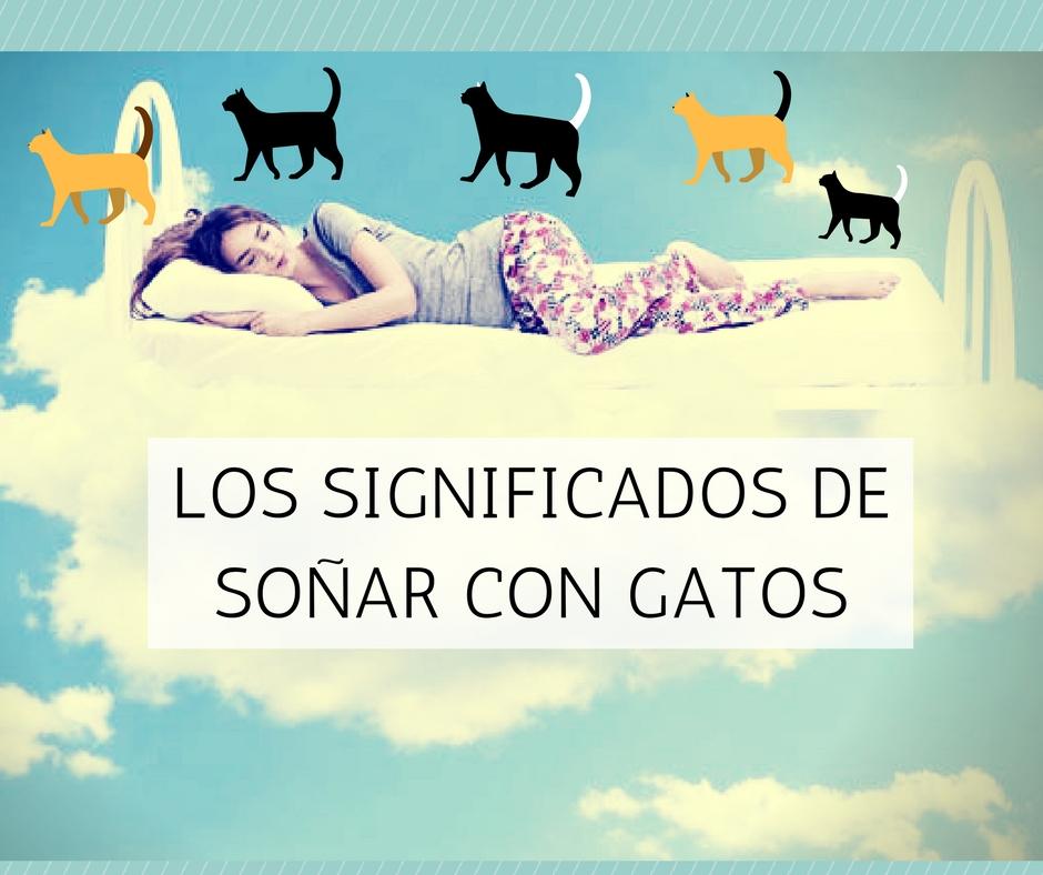Significado soñar gatos