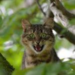Soñar con un gato que ataca | Foto: pxhere.com