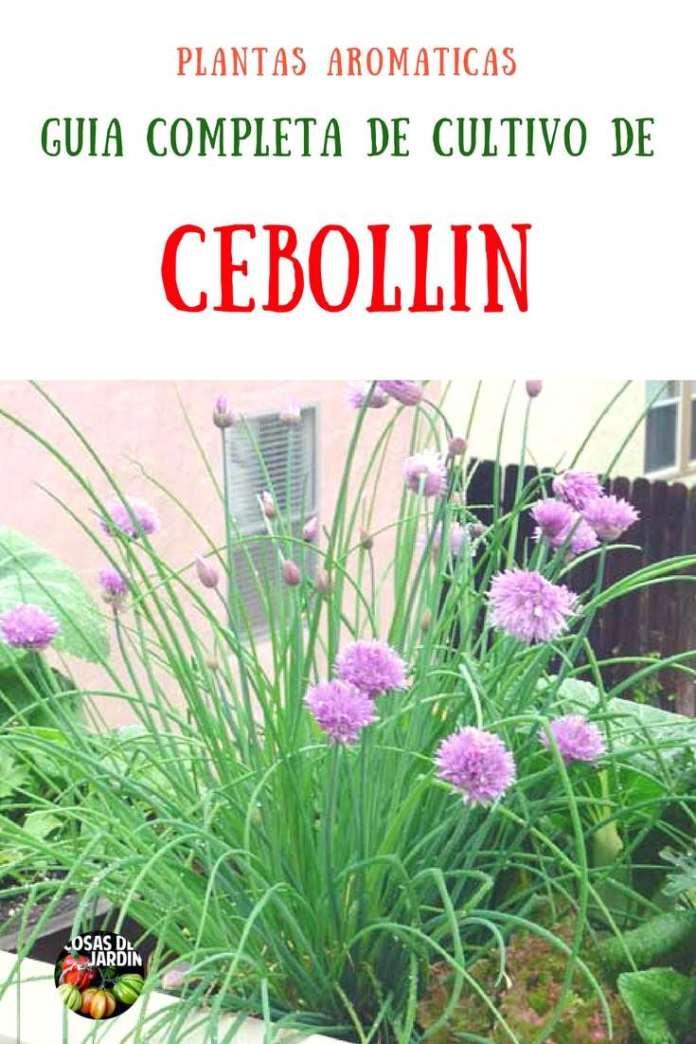 Como plantar ceboll n o cebolleta gu a de cultivo for Plantas ornamentales y sus cuidados