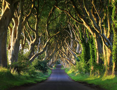 The Dark Hedges-irlanda