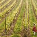 movimento-turismo-del-vino-promuove-cantine-aperte-insieme-5