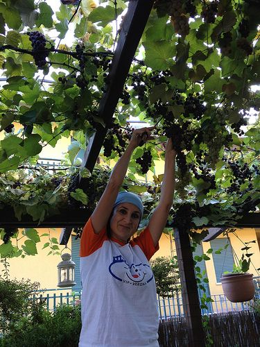 Focaccia all'uva fragola bianca con vari valori aggiunti