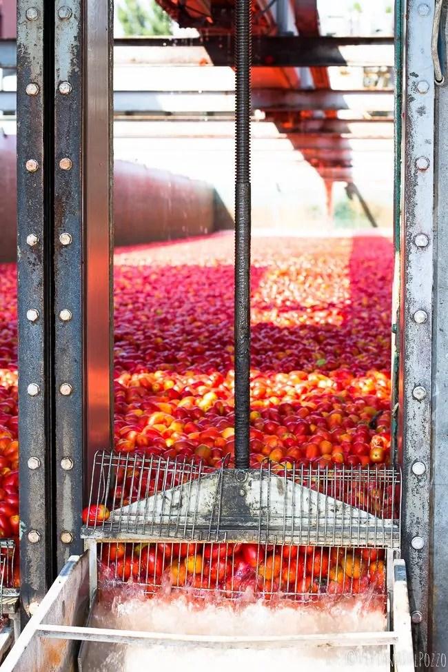 finestra-sui-pomodori