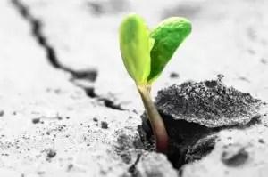 plant_cement-300x199