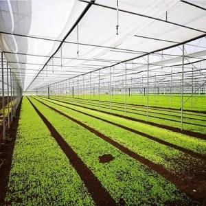 serre per agricoltura