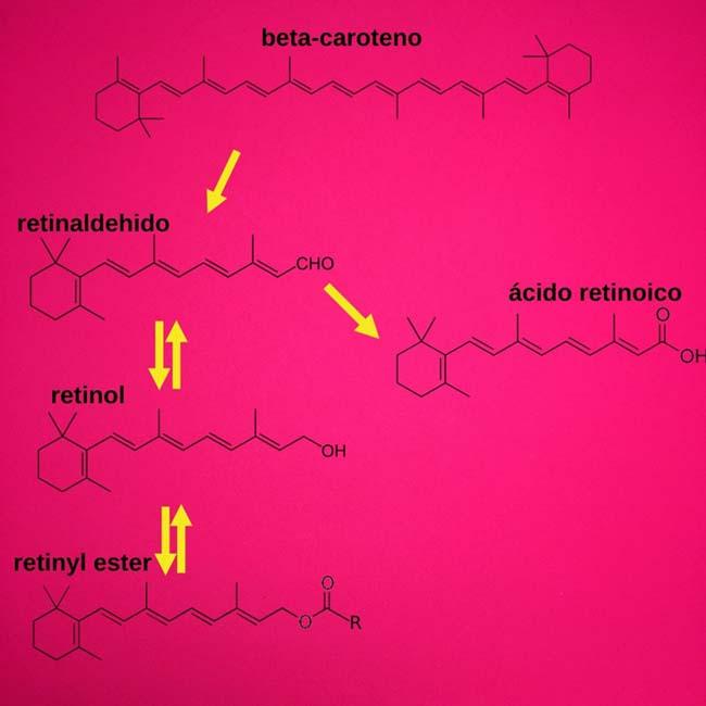 metabolismo de retinol, retinal y retinil