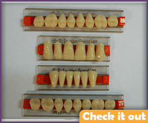 Prop Teeth Individual.