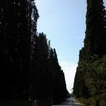 Bolgheri frazione di Castagnet