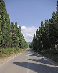 bolgheri viale cipressi