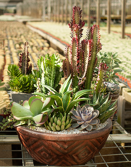 Make Beautiful Easy Care Container Gardens With Desert Escape