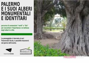 24-alberi-di-citta-alla-scoperta-degli-alberi-monumentali-e-identitari-di-palermo