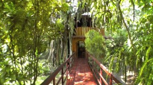 topo tree house entrance