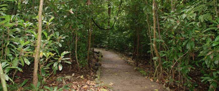 Carara-National-Park