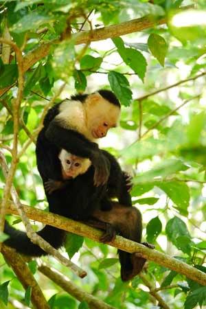 Encanta-La-Vida-monkey