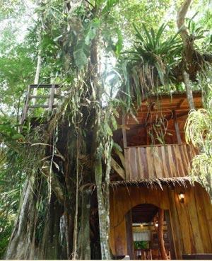 Topo's-tree-house