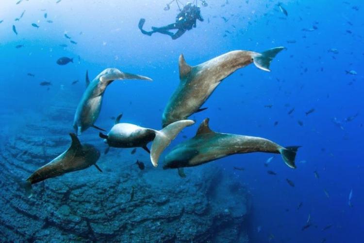 Scuba Diving Costa Rica 1