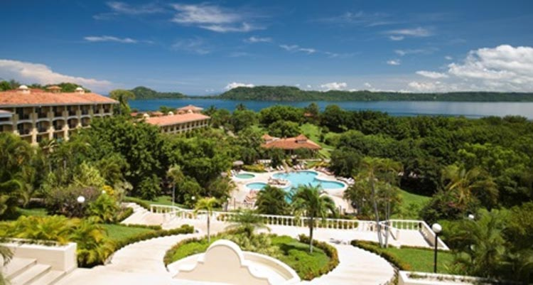 occidentalgrandpapagayo-adu
