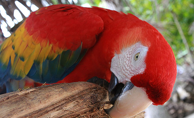 Ten gorgeous birds to see in Costa Rica