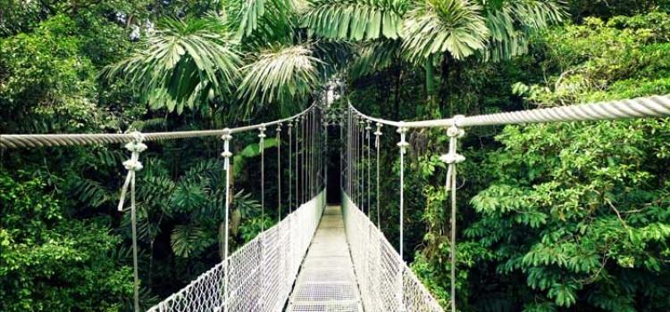 Arenal hanging bridge
