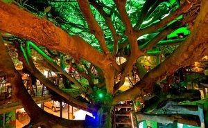 Tree-House-Restaurant
