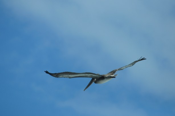 Flying Free In Costa Rica