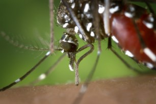 zika virus death symptoms 1