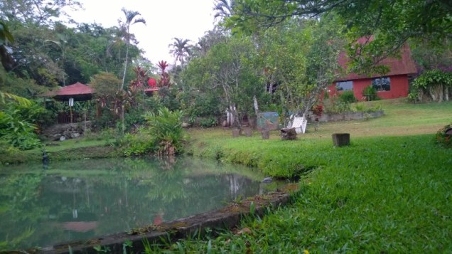 Tilapia Pond and grounds
