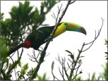 100 bird species at rentals in san ramon costa rica