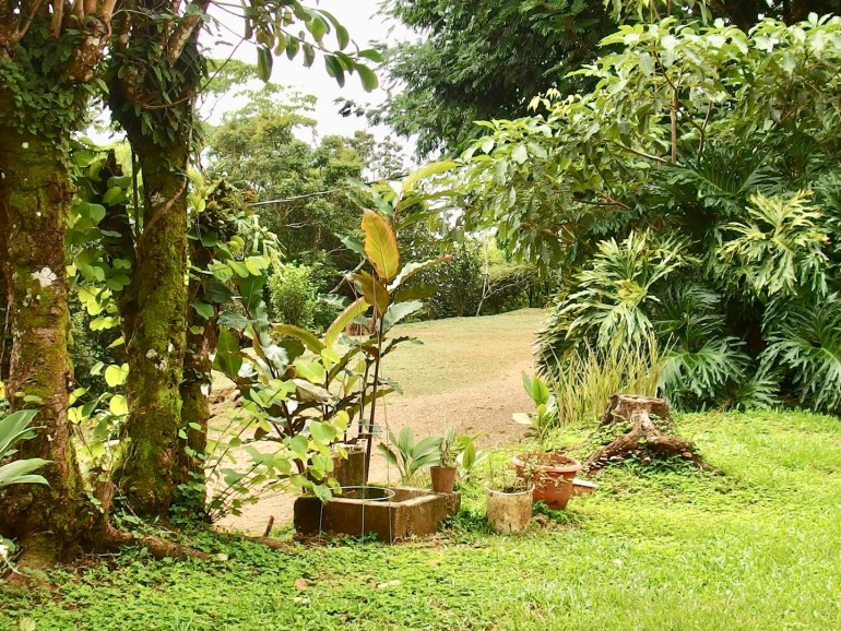 organic coffee farm for sale costa rica san ramonq