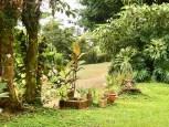 organic coffee farm for sale costa rica san ramonq