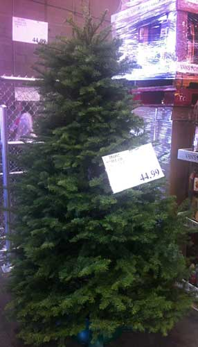 Costco Christmas Trees | Costco Insider