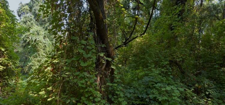 Tall Forest Bird Survey