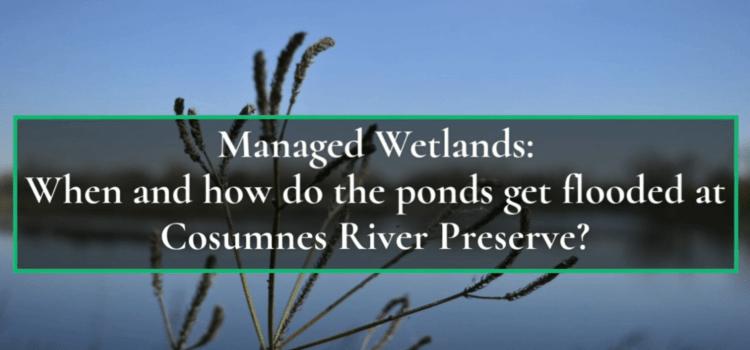 Flooding the Preserve's Managed Wetlands