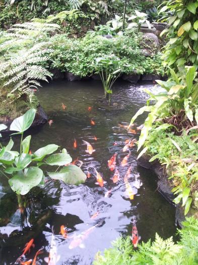 Pourquoi il y a tant de bassins dans les jardins basques