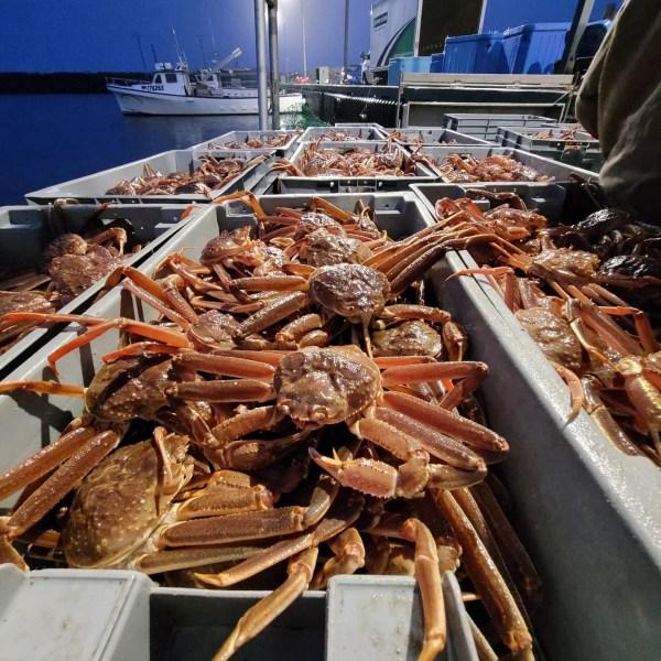 Bateau de crabe