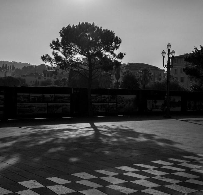 Photo de la semaine : L'arbre et son ombre