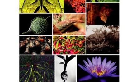 Exposition Végétal Emoi