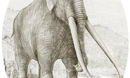 """""""Histoire d'os"""" Les animaux de la Préhistoire"""
