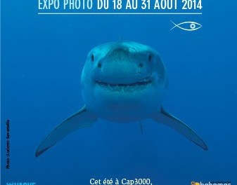 Expo photo : Requins & Compagnie