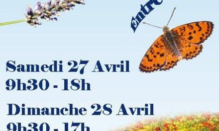 Salon Roquefort Nature
