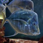 Aquarium, cote.azur.fr©