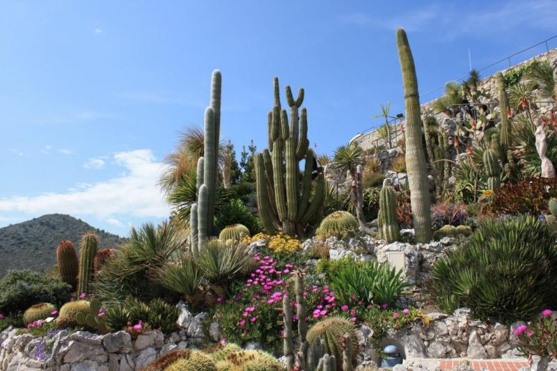 Jardin Exotique