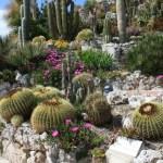 Jardin exotique, bibi©