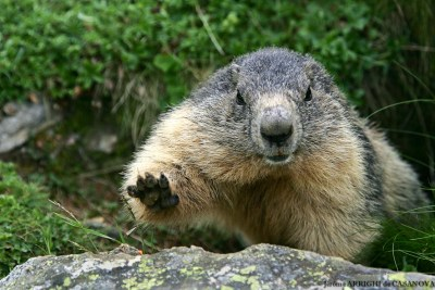 Marmotte-2919-Fenestre