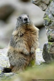 Marmotte-6074-Fenestre