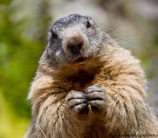 Marmotte-9888-Fenestre
