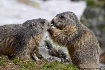 Marmottes-5133-Fenestre